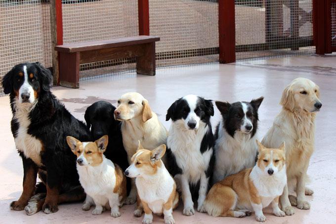 第一種動物取扱業登録